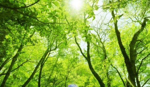 【中国輸入】ブラウズツリーガイドとは何か